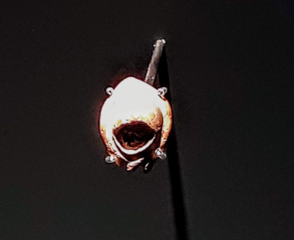 coquillage le plus vieux bijou du monde 90 000 ans